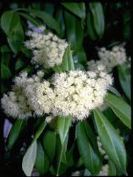 Very Fragrant Plants - fragrant plants a selection of plants carefully chosen for the