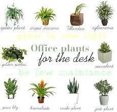 best plant for office office plant light best plants for office interesting office