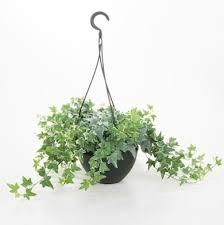 houseplant trellis best house plants to improve indoor air quality bob vila