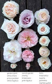 best 25 blush roses ideas on pinterest pink roses wedding jars