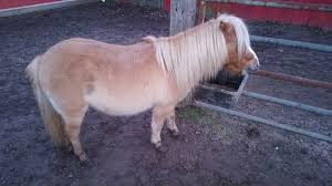 How To Tell If A Horse Is Blind Horse Shoe Equine Rescue Home Facebook