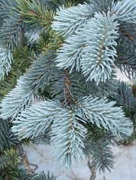 baldwin nurseries perennials shrubs trees for nova scotia