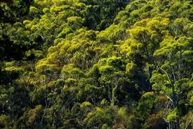 Tropical Rainforest Plant List - rainforest layers discover the layers of a rainforest