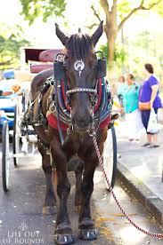 King Kamehameha Flag King Kamehameha Day Floral Parade In Honolulu Life Out Of Bounds