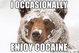 Coke Bear Meme - image 103276 cocaine bear know your meme