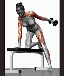 Muscles Used When Bench Pressing Gym Workout Exercises Explained Pictures Pics Express Co Uk