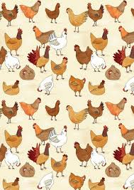 chicken pattern tilly jpg backyard chickens pinterest