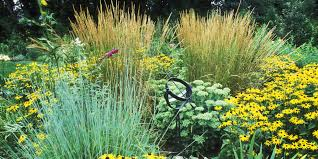 best ornamental grasses for your garden