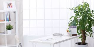 Office Plants by 5 Surprising Impacts Of Office Décor Huffpost