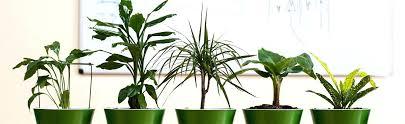 indoor vine plant indoor vine plant identification creative house plant vine best