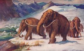 woolly mammoth rises crave