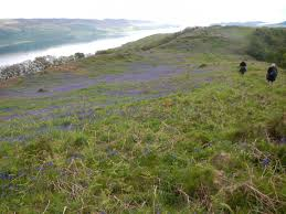 plants native to scotland argyll national nature reserves managed by scottish natural heritage