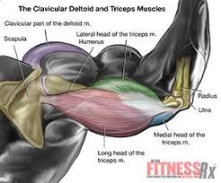 Muscles Used When Bench Pressing Fst функционально силовой тренинг Revolutionize Your Chest And
