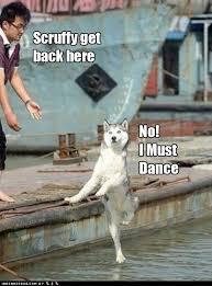 Dancing Dog Meme - scruffy get back here i has a hotdog dog pictures funny