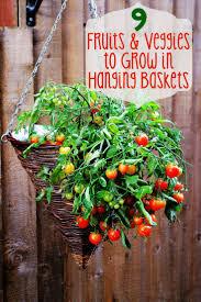 Decorative Vegetable Garden by Best 25 Hanging Basket Garden Ideas On Pinterest Decorative