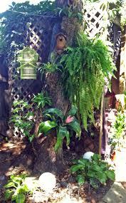 tropical backyard the year of living fabulously