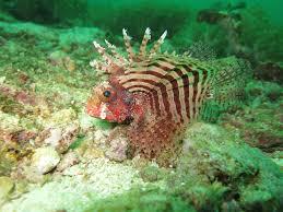 free images sea nature ocean animal diving wildlife
