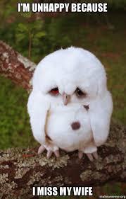 Unhappy Meme - i m unhappy because i miss my wife sad owl make a meme