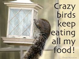 Crazy Bird Meme - quotes and poetry memes beauty observed
