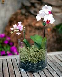 tips for beautiful indoor plants u2013 orchid care interior design