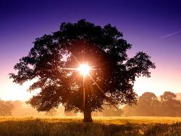 the tree of lights barnstorming