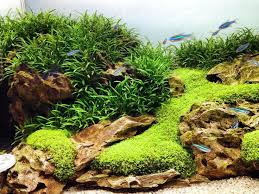 Aquascaping With Driftwood 278 Best Beautiful Tanks Images On Pinterest Aquascaping