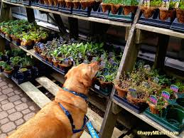 dog friendly gardening tips for memorial day weekend