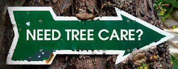 voted best knoxville tree service company tree care in knoxville