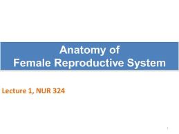 Anatomy Of Female Reproductive System Anatomy Of Female Reproductive System Ppt Video Online Download