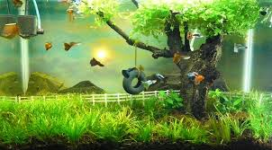 Aquascape Store Second Aquascape Attempt Watercolor Memories The Planted Tank Forum
