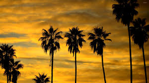 Palm Tree Wallpaper Photo Collection Palm Tree Wallpaper 29332
