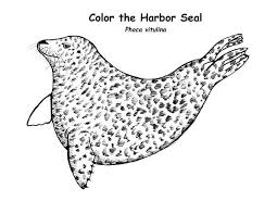 seal coloring page harbor seal coloring page coloring sky