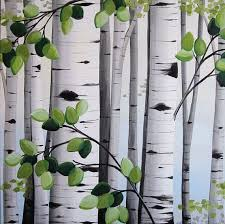 best 25 white bark trees ideas on trees with white