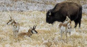 South Dakota wildlife images South dakota wildlife watching and birding jpg