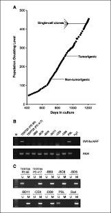tumorigenic heterogeneity in cancer stem cells evolved from long