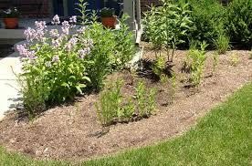 kentucky native plants native plants unlimited rain gardens
