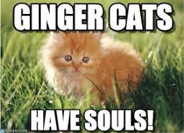 Cats Memes - ginger cat memes gingercatsoftheworldunite