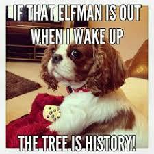 Meme King - cavalier king charles meme drop the ball dogmeme funny