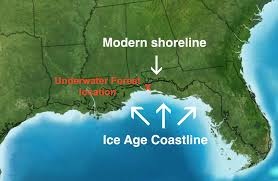 Map Of Gulf Shores Alabama Gulf U0027s 60 000 Year Old Underwater Forest Spills Its Secrets In New