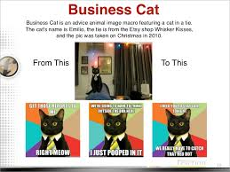 Business Cat Memes - cat memes 2011 2012