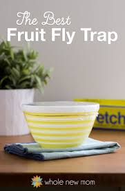 fruit fly trap the