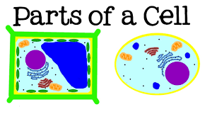 all about cells and cell structure parts of the cell for kids