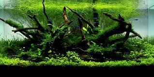 Aquarium Aquascapes Understanding Nature Aquascaping Style The Aquarium Guide