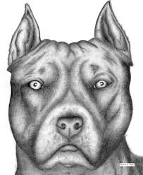 drawn pitbull wing pencil and in color drawn pitbull wing