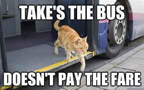 Rebel Meme - take s the bus doesn t pay the fare rebel cat quickmeme