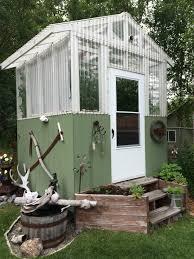 quirky alaska greenhouse tomatoes alaska master gardener blog