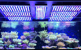 best lighting for corals why the orphek atlantik v3 plus is the best reef light available orphek