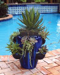 container gardens in the palm beach county landscape pamela