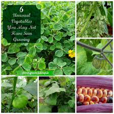 6 unusual vegetables you may not have seen growing beforegreenside up