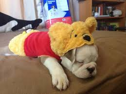 happy halloween u2013 baggybulldogs